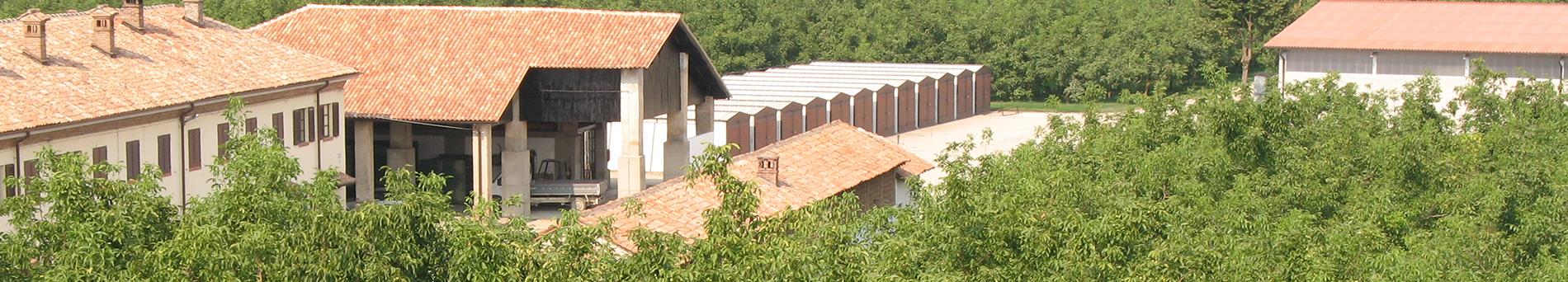 Tenuta Agricorti - Agricorti estate