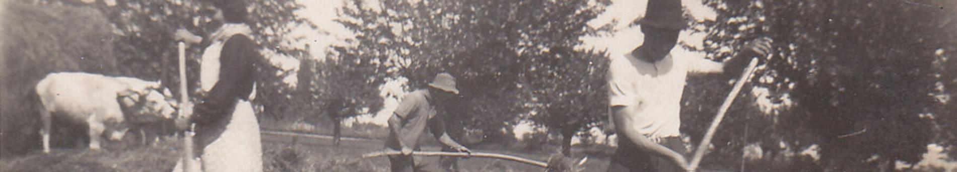 Storia dell'azienda agricola Agricorti - History of Agricorti farm
